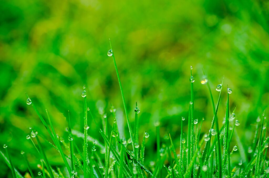 Tips for choosing feed for your lawn